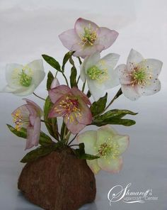 wafer paper Christmas Rose