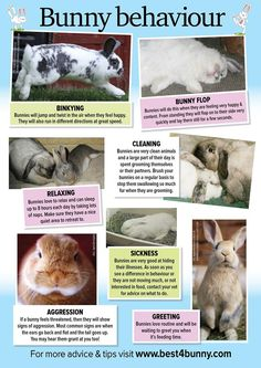 Rabbit behaviour ♥