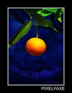 Orange, Fruit, Built Ins, Fertility, Xmas, The Fruit