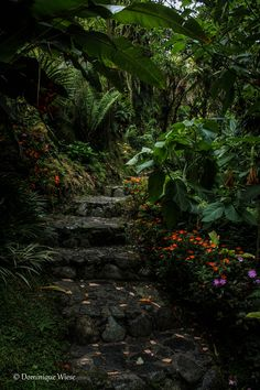 Garden at Dracula's Orchid Farm in Volcan, Panama