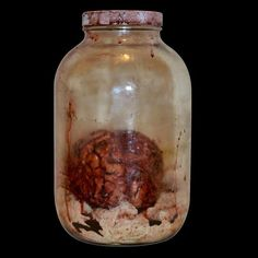 Highly detailed Brian in aged specimen jar Comes in One gallon glass jar with bloody gauze