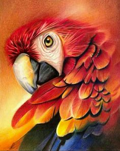 New Bird Painting Parrot Ideas Parrot Drawing, Parrot Painting, Painting & Drawing, Watercolor Paintings, Animal Paintings, Animal Drawings, Art Drawings, Acrylic Painting Animals, Polychromos