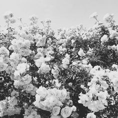 / I want fashion to be a daily part of my life! Of My Life, All Things, Bloom, Darkness, Floral, Flowers, Outdoor, Fashion, Outdoors