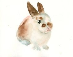 #watercolor #illustration #bunny