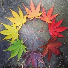 Life cycle of a leaf