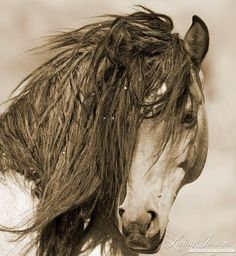 The wild stallion Freedom comes close in a quiet moment at the Return to Freedom Sanctuary in Lompoc, California. #horse #wildhorse