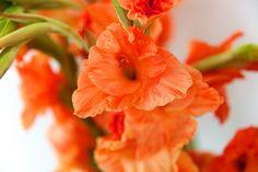 Gladiolus - I have a pretty pastel mix!