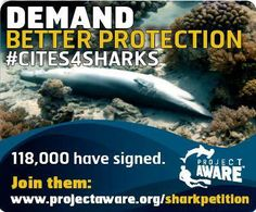 Already signed the petition? Please do more. Like, share and visit projectaware.org for more opportunities to make your voice heard. CITES leaders need to hear loud and clear that we want them to vote YES for sharks and rays in March. #CITES4SHARKS