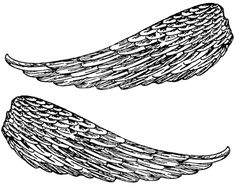 Feather Angel Wings :: Angel Wings - Image 2