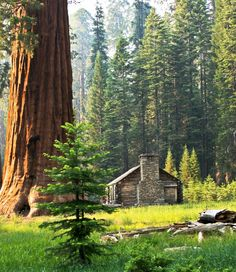 Wouldn't you love to run away to this cabin? We would. #glamping #getaway #explorewildly