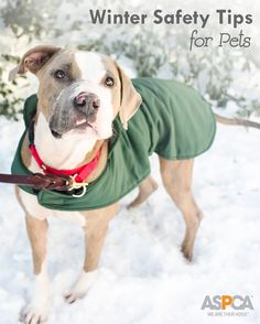 Keep your pets safe this winter!