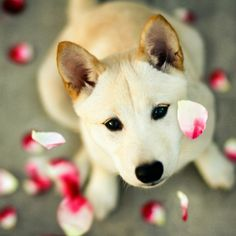 Share the Cute Dogs and Puppies to Make you Smile. Have a Nice Day! #dogs #oohpet
