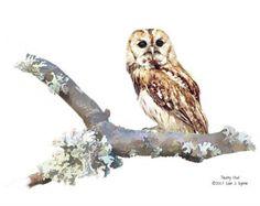 owl print barn owl print wildlife print wildlife