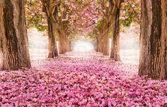 Romantic Tunnel - Fotobehang & Behang - Photowall