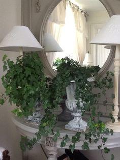 Ivy in old urn Urn, Indoor Plants, Outdoor Gardens, Outdoor Living, Space, Home Decor, Inside Plants, Floor Space, Outdoor Life