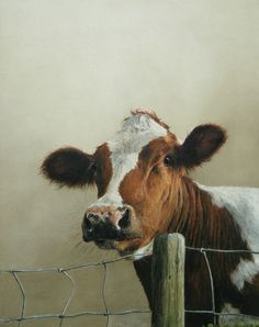 Beautiful painting of Annabelle Lanfermeijer. Farm Animals, Animals And Pets, Cute Animals, Cow Pictures, Animal Pictures, Beautiful Creatures, Animals Beautiful, Cow Painting, Farm Art