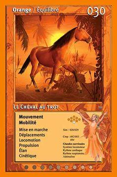 030 Le Cheval au trot