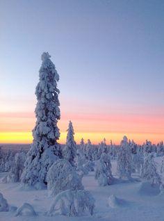 Levi, winter wonderland. Finland Lapland