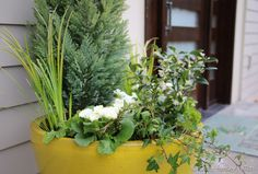 #Spring #PlantContai