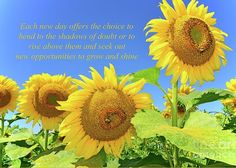 Sunflower Inspiration-Rise and Shine by Regina Geoghan. view of a group of golden sunflowers framed against a blue sky with an original inspirational text message. Sunflower Poem, Sunflower Fields, Inspirational Text Messages, Yellow Artwork, Sunflower Photography, Artist Card, Photography Challenge, Any Images, Kitchen Art