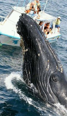 Whale watching on the coast at Puerto López, Ecuador ® Ministry of Tourism Orcas, Beautiful Creatures, Animals Beautiful, Ecuador, Ocean Creatures, Humpback Whale, Bottlenose Dolphin, Sea And Ocean, Pacific Ocean