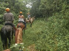 Horseback Riding in the lush greens of Puerto Rico is like dream. Make it come true!