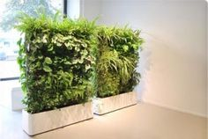 Petrified artificial green wall vertically placed at Columns .Totally love this - Get this look with our stunning artificial green wall. Take a look at our website. Different plant options available Artificial Indoor Plants, Small Indoor Plants, Fake Plants, Outdoor Plants, Artificial Flowers, Potted Plants, Indoor Outdoor, Artificial Hedges, Bamboo Plants