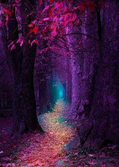 mystic purple path