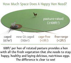 What is pasture-raising? - Vital FarmsVital Farms