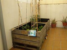 Dolors i Jaume (Tàrrega) Plants, Gardens, Plant, Planets