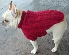 Free, basic knitted dog sweater pattern for larger dogs. Great project for beginning to experienced knitters.