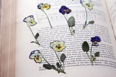 Pressed flowers are perennially lovely. Gardenista Issue 68 · Africana · April 18, 2013