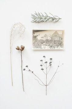 Collection of natural objects and vintage photo