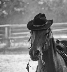 http://www.legendeligeia.fr/photos/cheval-tres-distingue.html