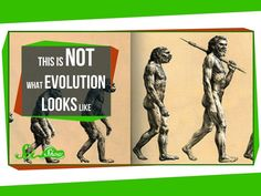 Video Explaining what Adaptation and Evolution ARE NOT/ Clarifying Misconceptions Biology Classroom, Teaching Biology, Biology Teacher, Ap Biology, Secondary School Science, Middle School Science, Fun Classroom Activities, Science Activities, Science Resources