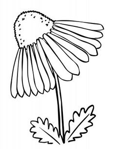 coneflower drawing - Google Search