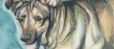 Hayvan Sahiplenme Bilinci Resim Projesi   http://www.nouvart.net/hayvan-sahiplenme-bilinci-resim-projesi/