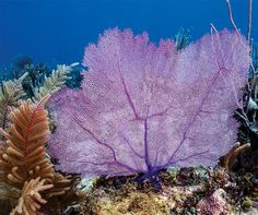 Along Cuba's Coast, The Last Best <br>Coral Reefs in the Caribbean Thrive: e360 Gallery
