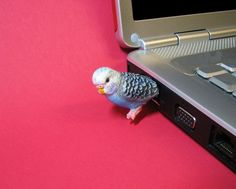 budgie usb drive... this is so cute!!