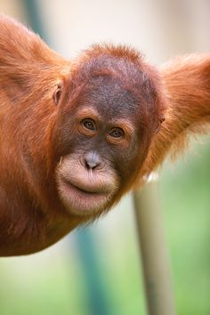 Network Infrastructure, Save Wildlife, Help Desk, Palm Oil, State Art, Bucket, Action, Phone