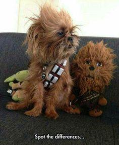 Star Wars - Chubacca Dog