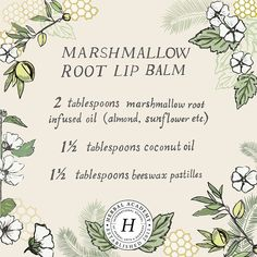 Your lips need to be soothed, healed, and moisturized all year long. Try this homemade marshmallow root lip balm that uses just a few simple ingredients! Healing Herbs, Natural Healing, Natural Health Remedies, Herbal Remedies, Diy Beauté, Herbal Magic, Medicinal Plants, Herbal Plants, Herbal Medicine
