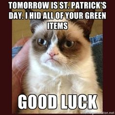 grumpy cat meme today | Grumpy Cat St Patrick's Day meme- Little Early but still funny.