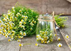 chamomile flowers in a glass jar on a wooden background Herbal Remedies, Home Remedies, Pet Health, Herb Garden, Glass Jars, Natural Health, Herbalism, Plants, Wooden Background