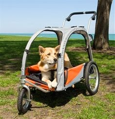 The dog bike trailer and jogger bring your four-legged friend and the dog owner almost anywhere and they Dog Bike Trailer, Dog Stroller, Cat Accessories, Animal House, Animal Quotes, Little Dogs, Four Legged, Animal Shelter, Dog Owners