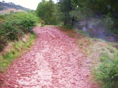 Rain and mud in usually sunny Spain as I walk my pilgrimage from Roncesvalles to Santiago de Compostela