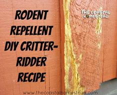 DIY Critter Ridder Recipe- Natural Rodent Repellent - My Homestead Life - Animals wild, Animals cutest, Animals funny, Animals drawings Best Chicken Coop, Pest Management, Spoil Yourself, Garden Guide, Garden Pests, Garden Bugs, Green Garden, Rodents, Pest Control