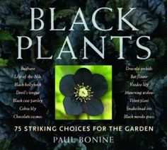 Review of 'Black Plants: 75 Striking Choices for the Garden' by Paul Bonine