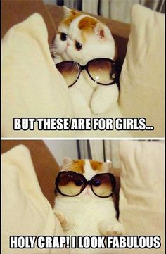 yes. stupid cats talking make me laugh... nearly every time.