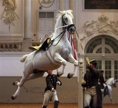 Lipizzaner horse of the Spanish Riding School performs during a rehearsal for a fundraising gala for the Spanish Riding School in Vienna, Austria